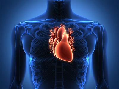 "<a id=""heart-transplantation"">Heart Transplantation</a>"