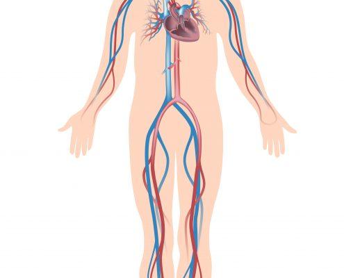 """<a id=""""endovascular-aneurysm-repair"""">Endovascular Aneurysm Repair</a>"""